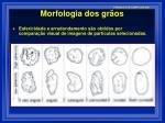 morfologia dos gr os