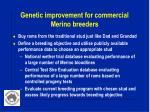 genetic improvement for commercial merino breeders