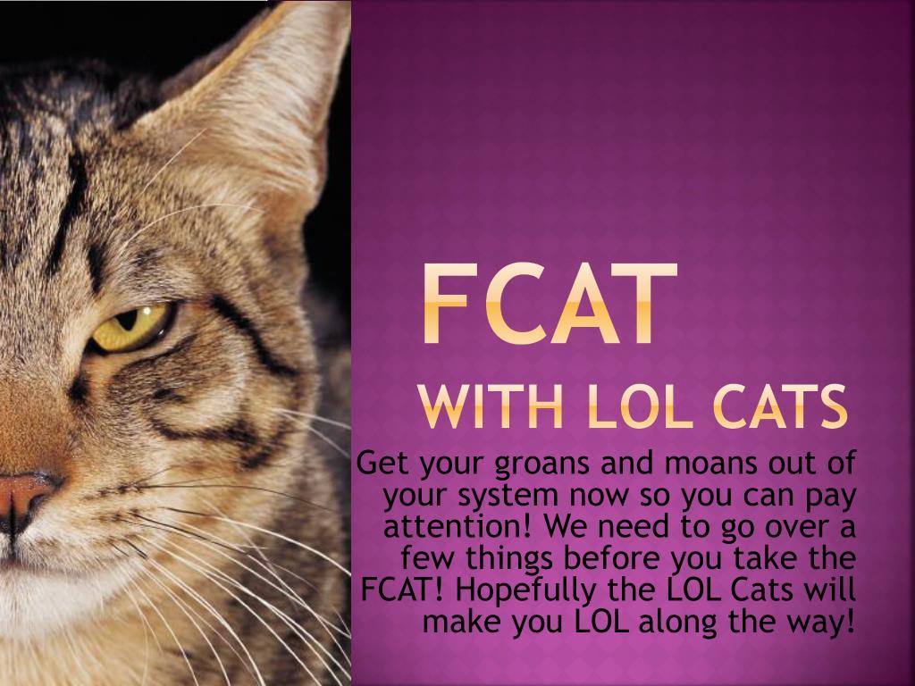 fcat with lol cats l.