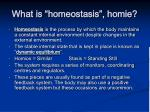 what is homeostasis homie