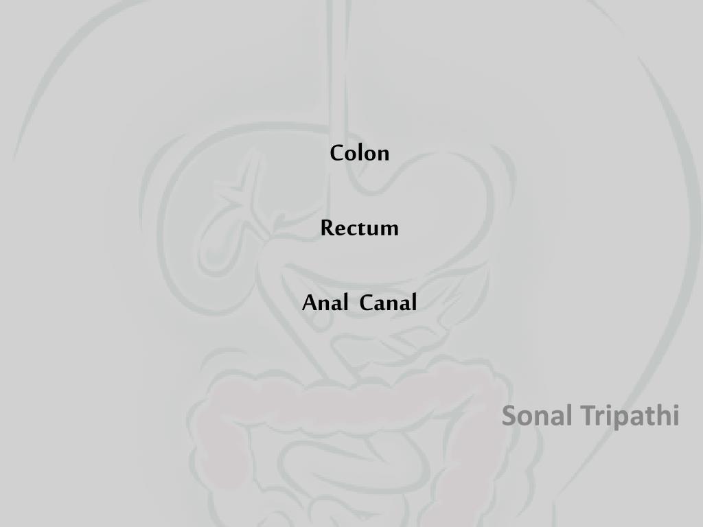 colon rectum anal canal l.