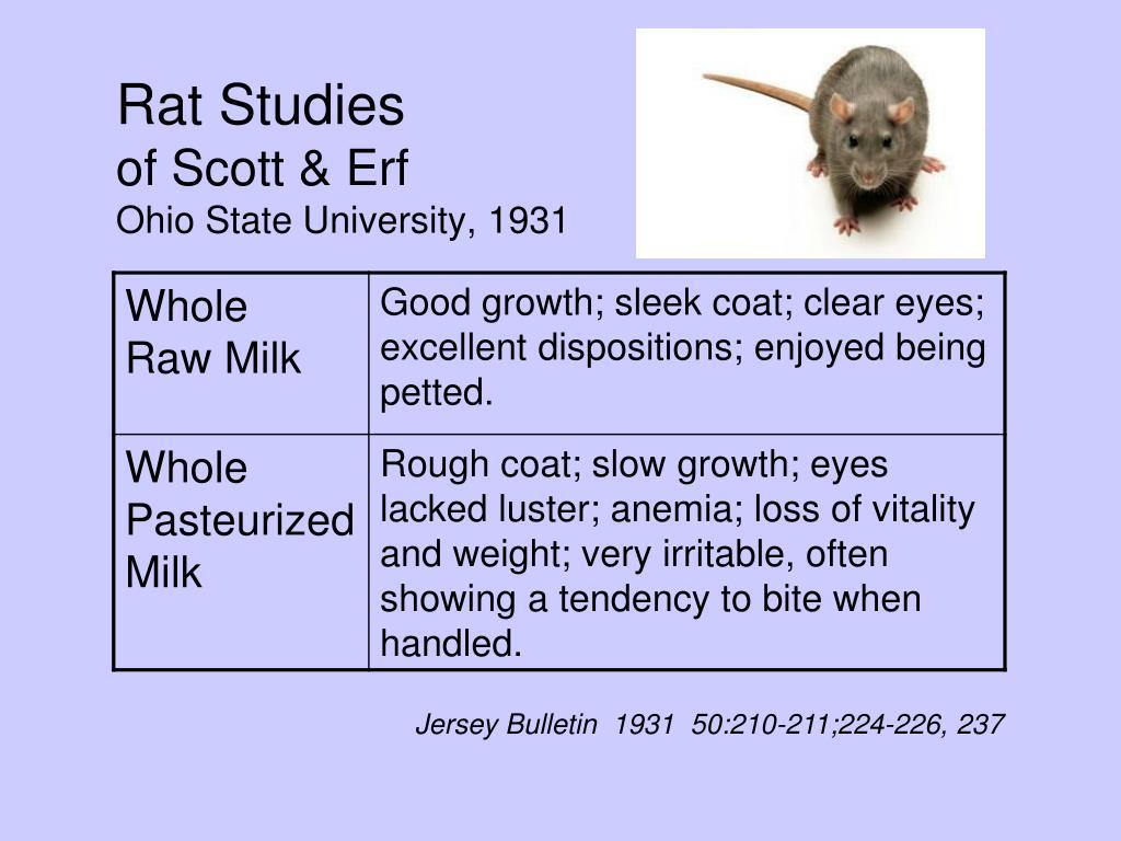 Rat Studies