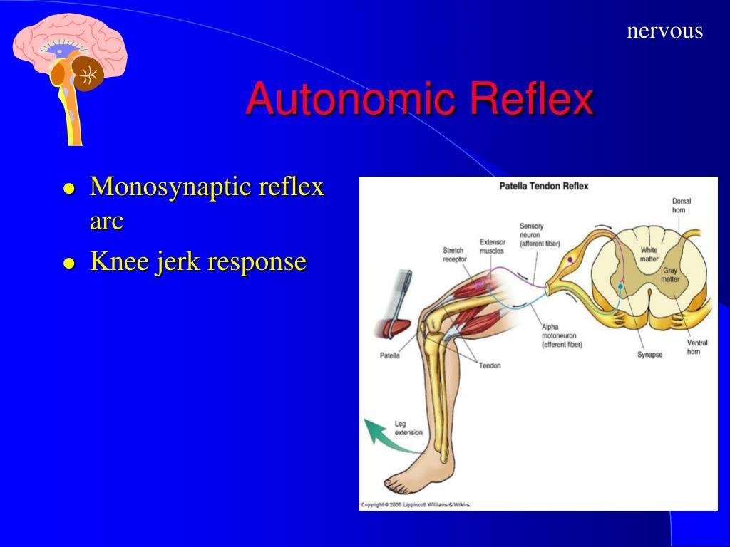 Autonomic Reflex