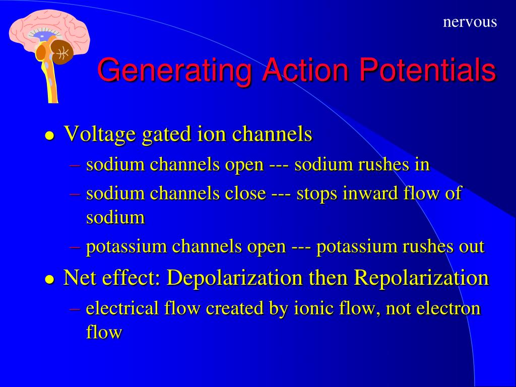 Generating Action Potentials