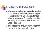 the nerve impulse cont14
