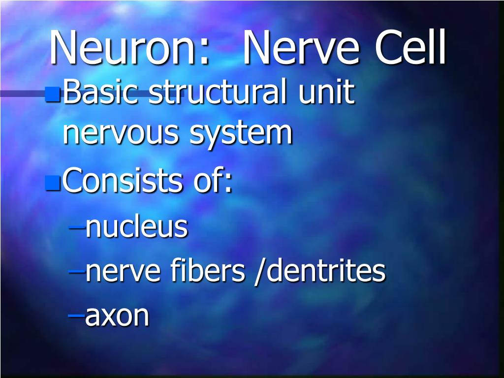 Neuron:  Nerve Cell