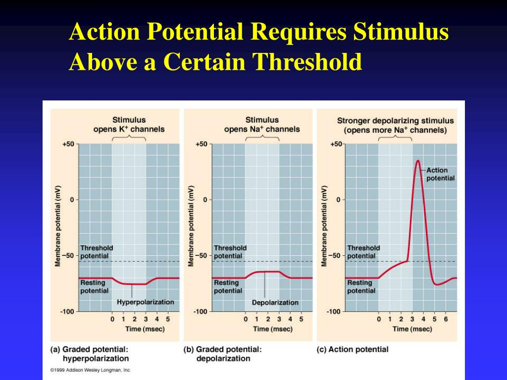 Action Potential Requires Stimulus Above a Certain Threshold