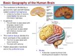 basic geography of the human brain