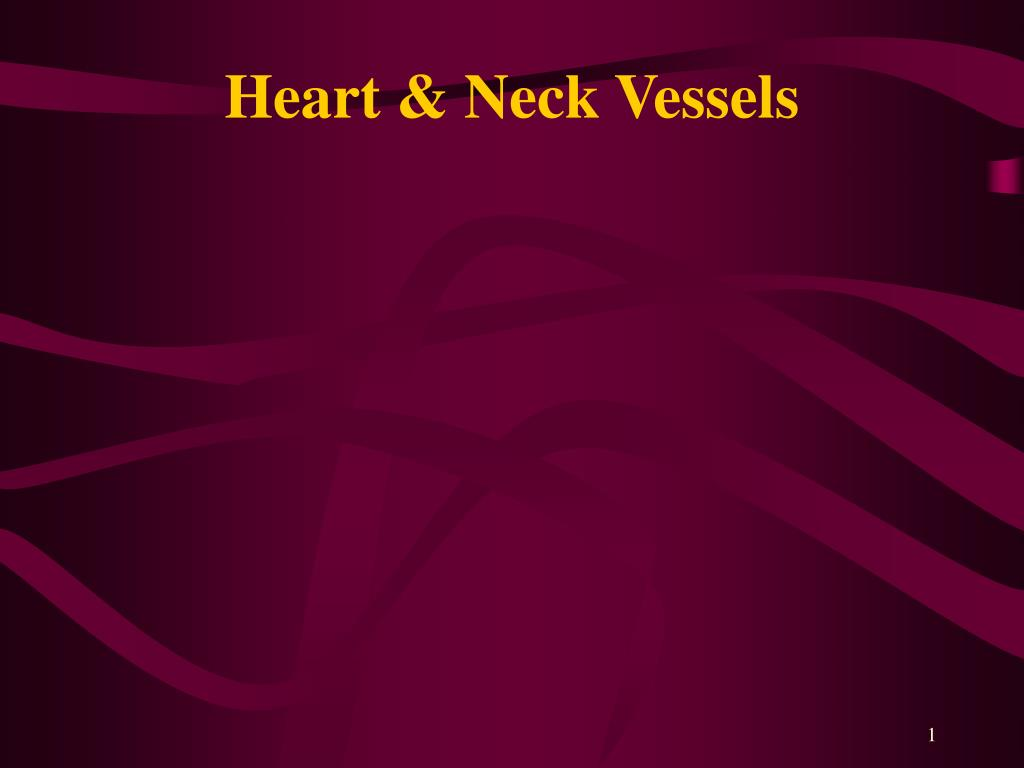 heart neck vessels l.