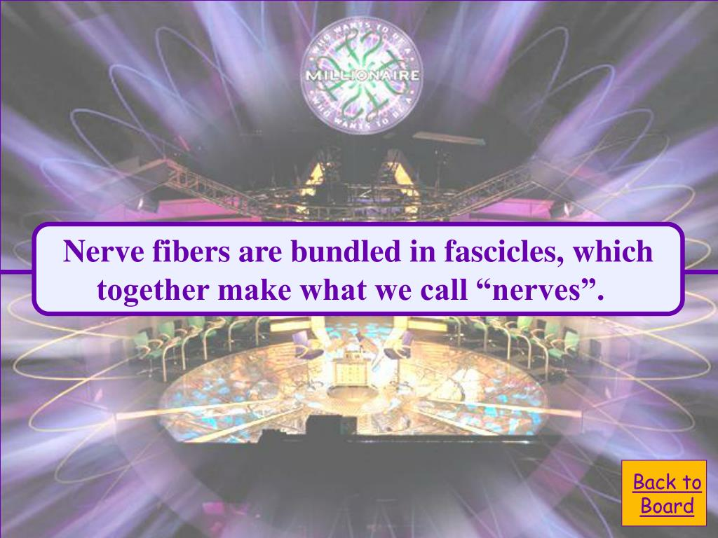 Nerve fibers are bundled in fascicles, which