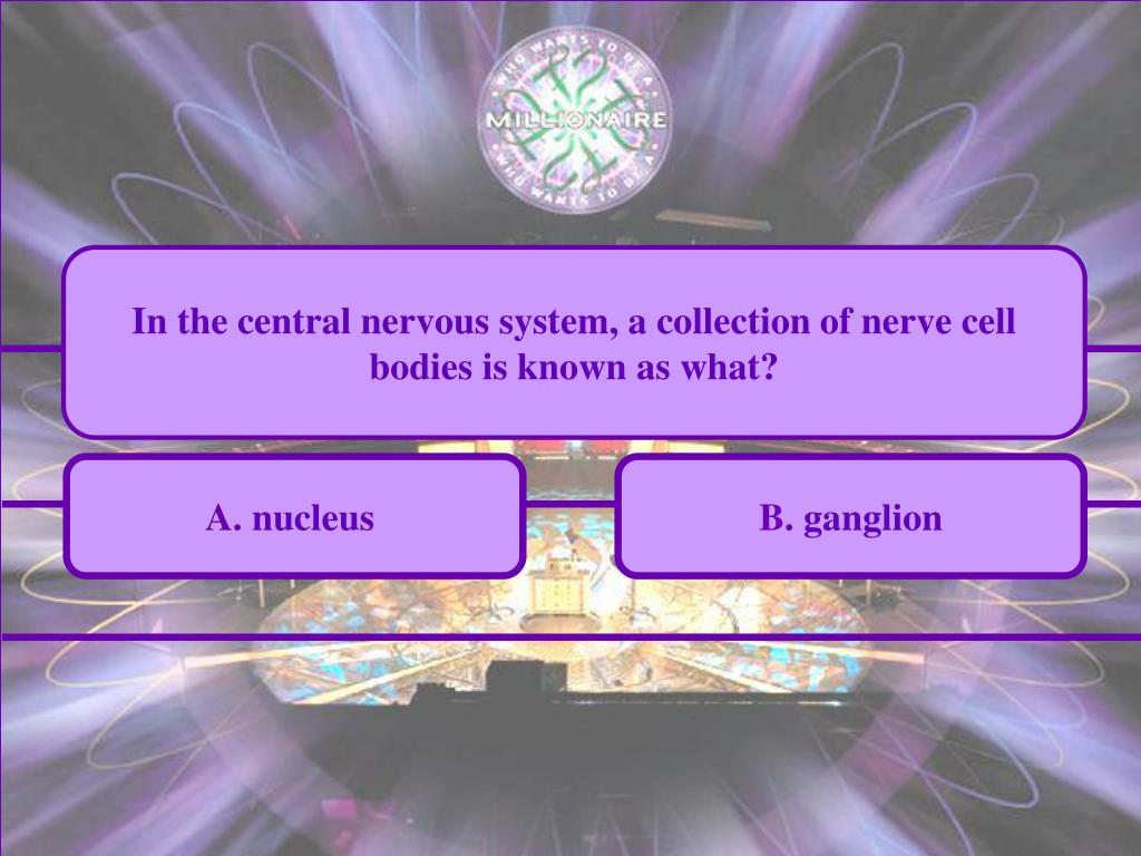 In the central nervous system, a collection of nerve cell bodies is known as what?