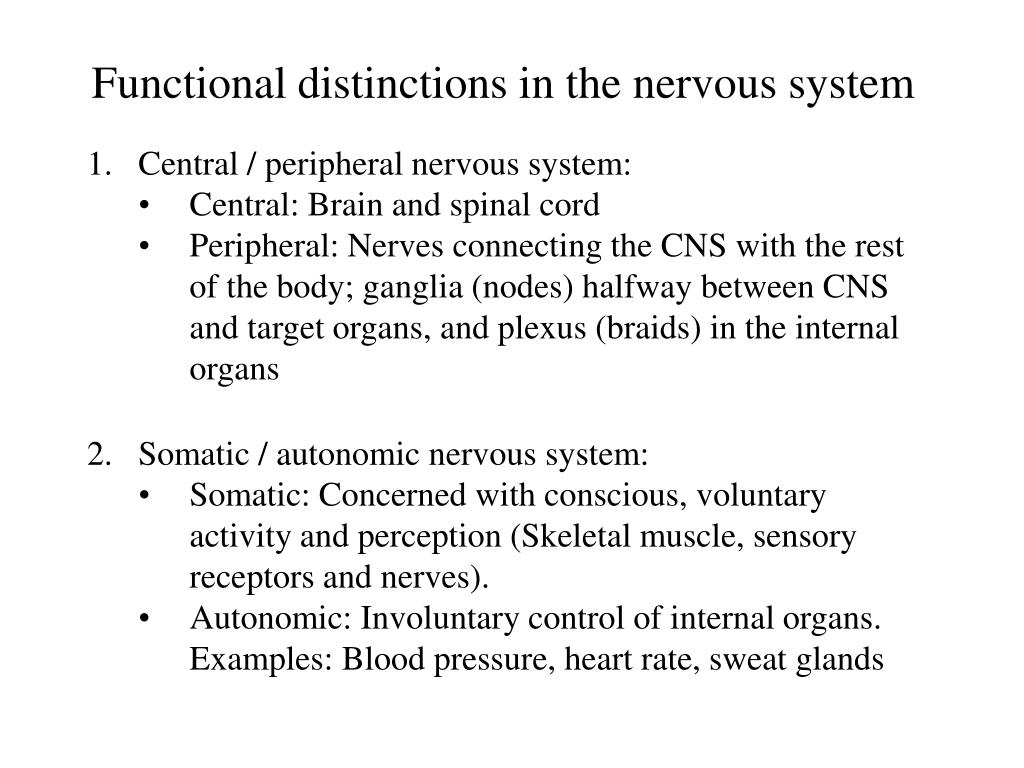 functional distinctions in the nervous system l.