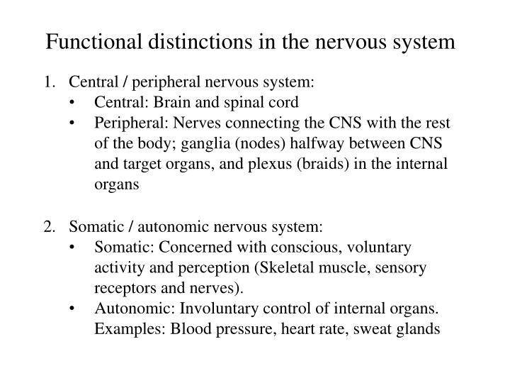 Functional distinctions in the nervous system