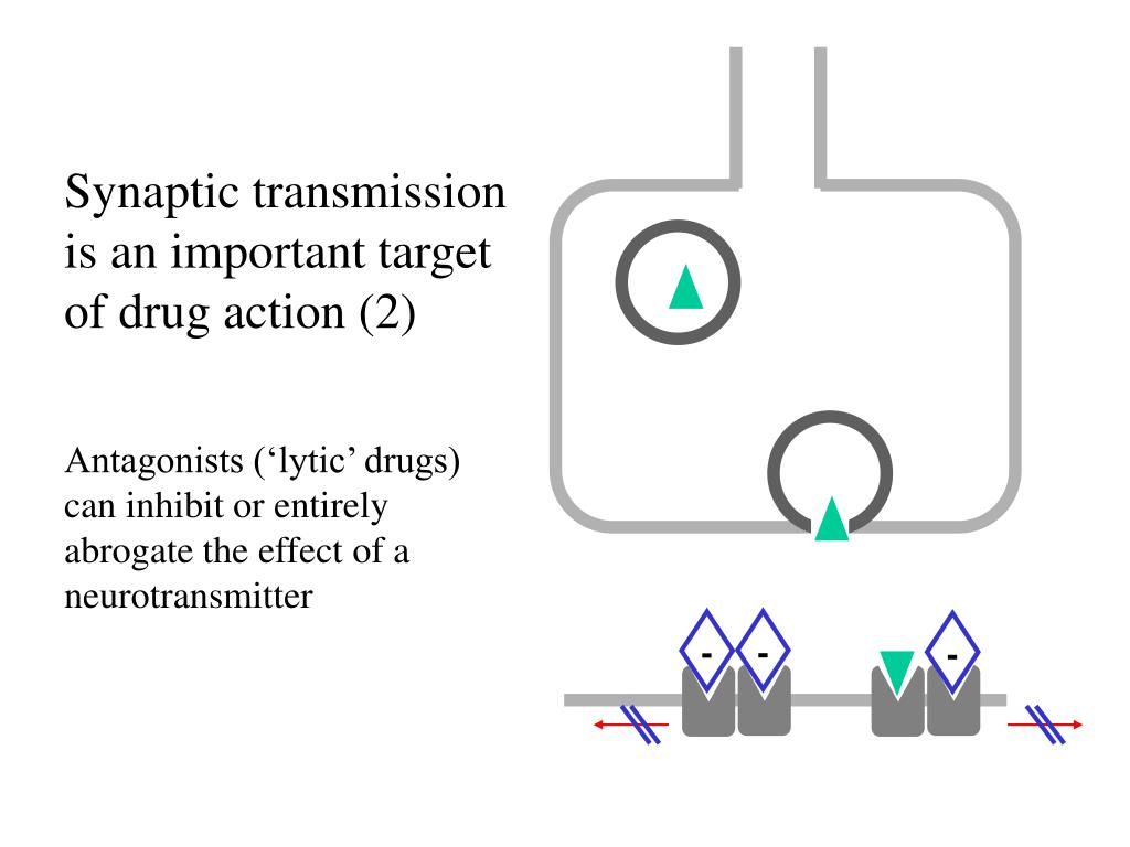 Synaptic transmission is an important target