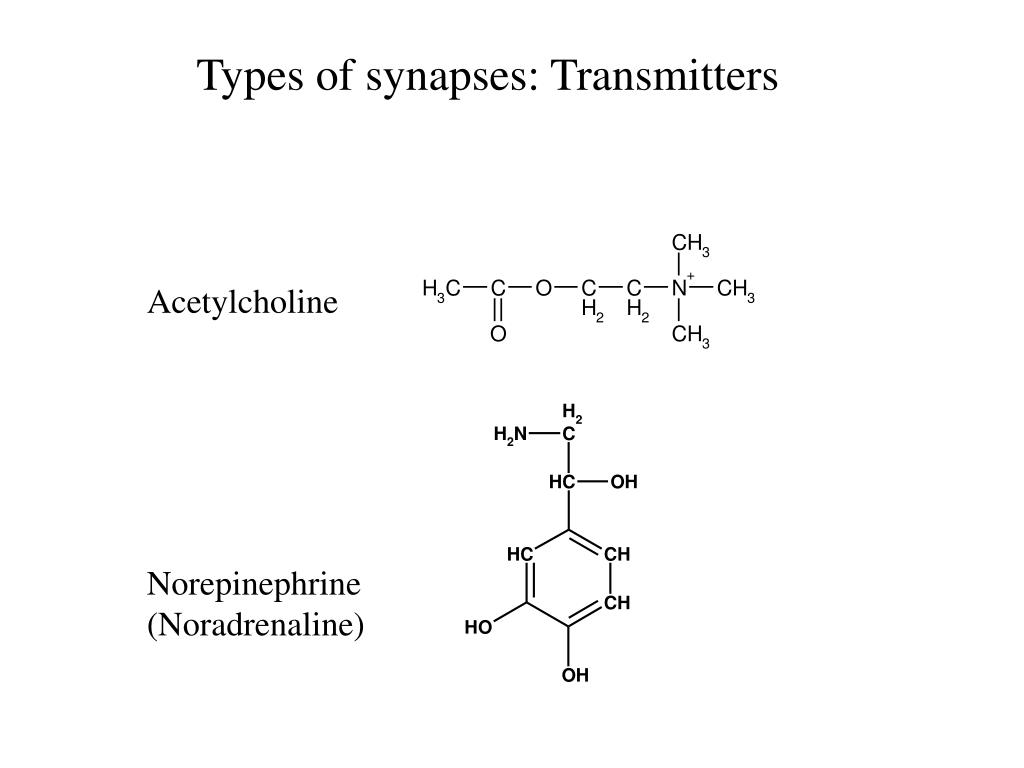 Types of synapses: Transmitters