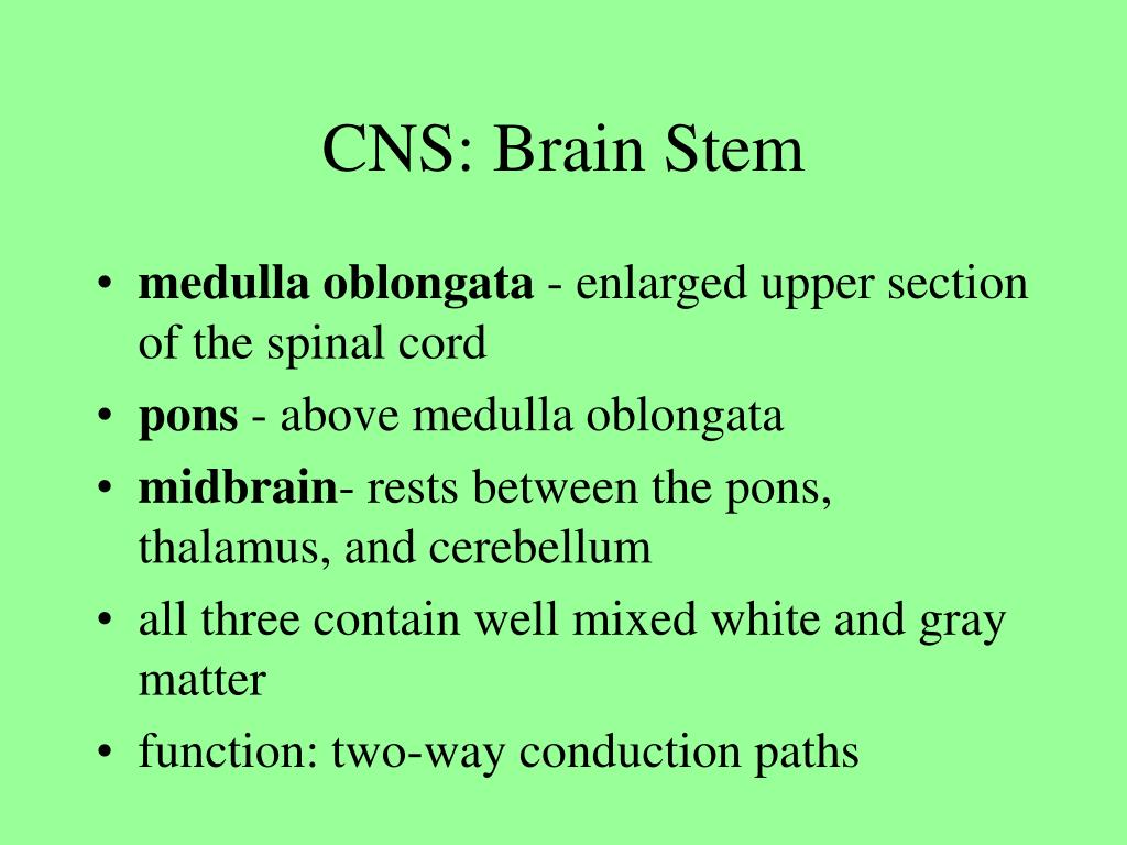 CNS: Brain Stem