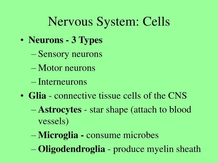 Nervous system cells3