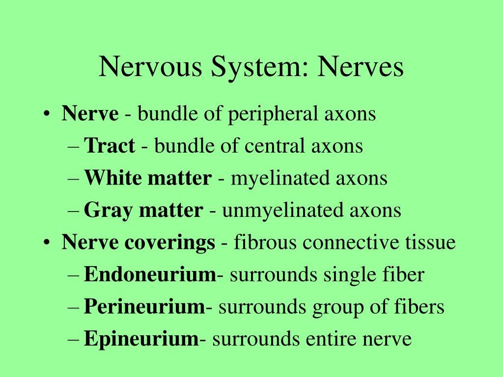Nervous System: Nerves