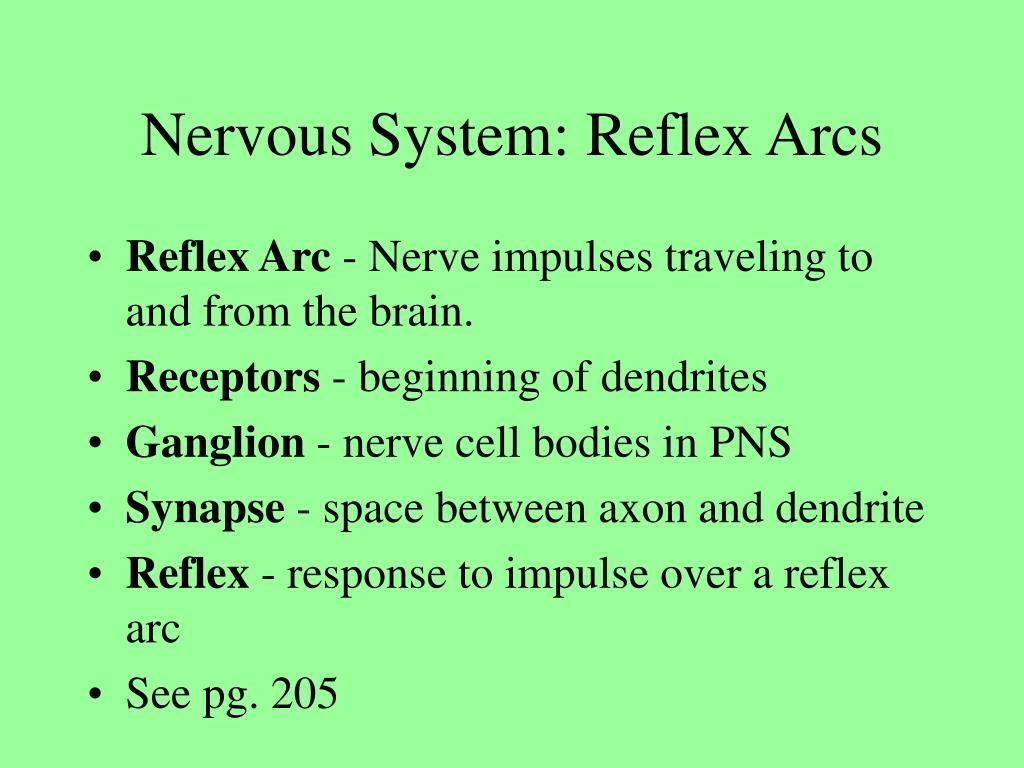 Nervous System: Reflex Arcs
