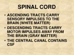 spinal cord21