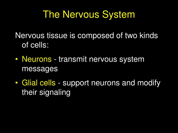 The nervous system3