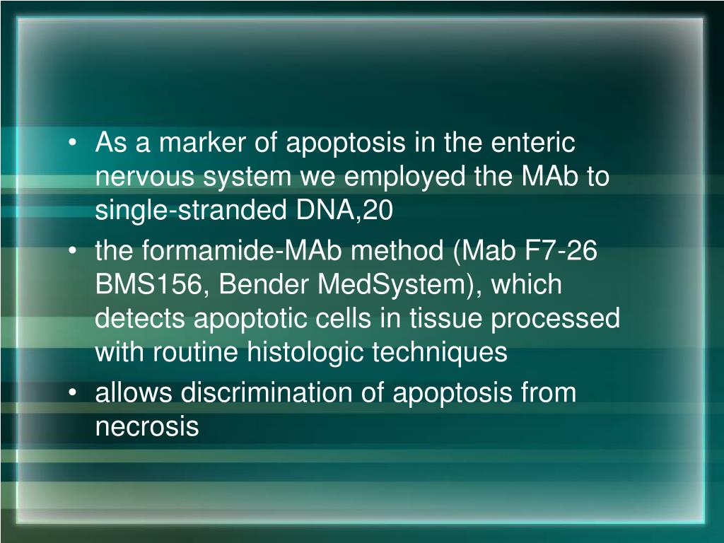 As a marker of apoptosis in the enteric nervous system we employed the MAb to single-stranded DNA,20
