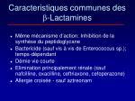 caracteristiques communes des lactamines