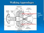 walking appendages