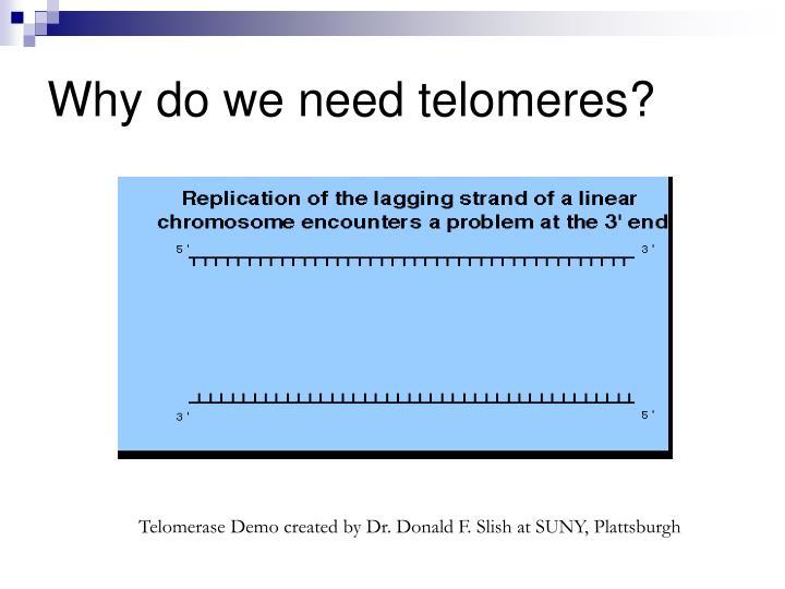 Why do we need telomeres