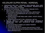 kelenjar supra renal adrenal