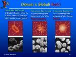 osmosi e globuli rossi