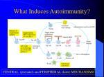 what induces autoimmunity