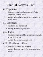 cranial nerves cont