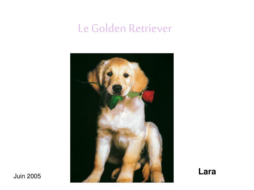 le golden retriever l.