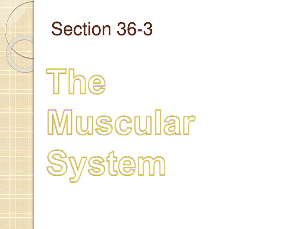 PPT - Chapter 36 The Integumentary , Skeletal, & Muscular ...