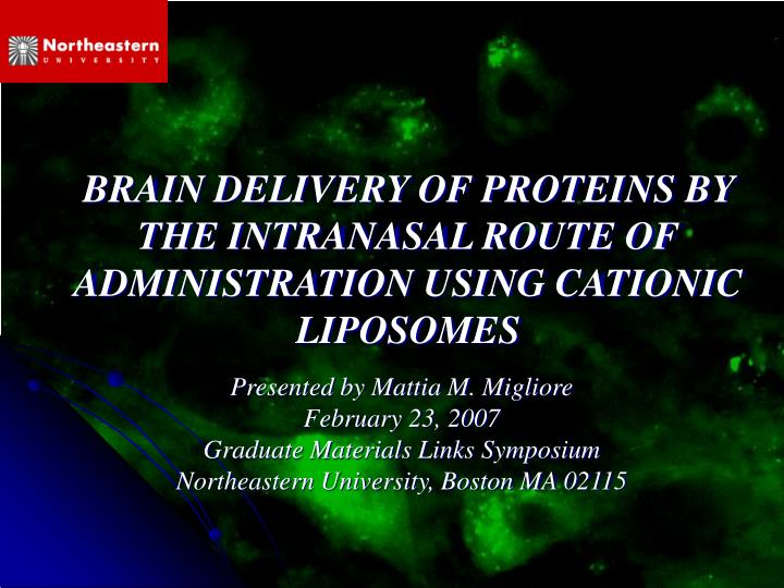 brain delivery of proteins by the intranasal route of administration using cationic liposomes n.