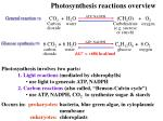 photosynthesis reactions overview