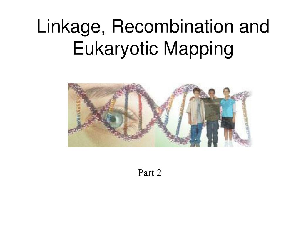 linkage recombination and eukaryotic mapping l.