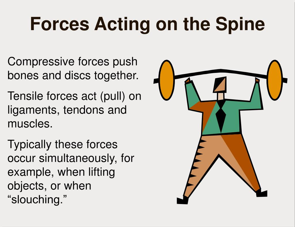 Compressive forces push bones and discs together.