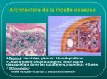 architecture de la moelle osseuse
