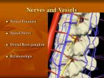 nerves and vessels