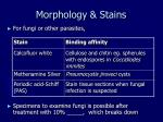 morphology stains1