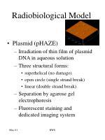 radiobiological model