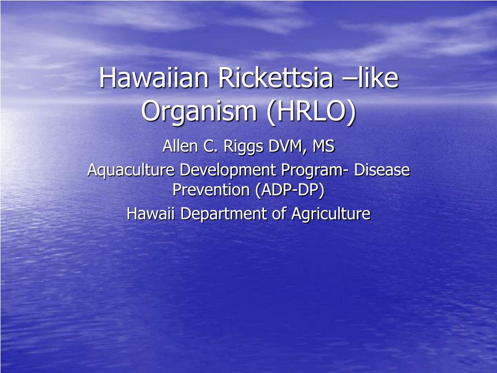 hawaiian rickettsia like organism hrlo l.