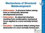 mechanisms of structural maldevelopment