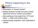 what s happening in the brain