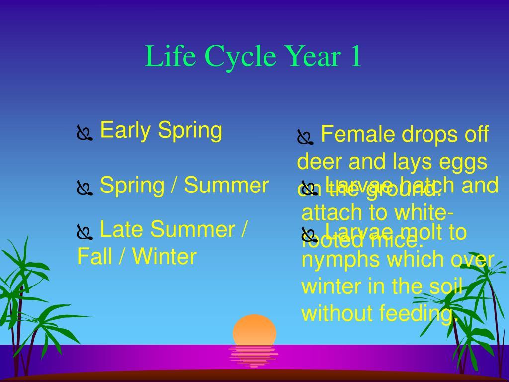 Life Cycle Year 1