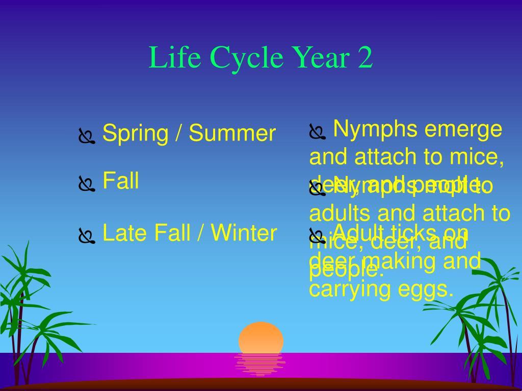 Life Cycle Year 2