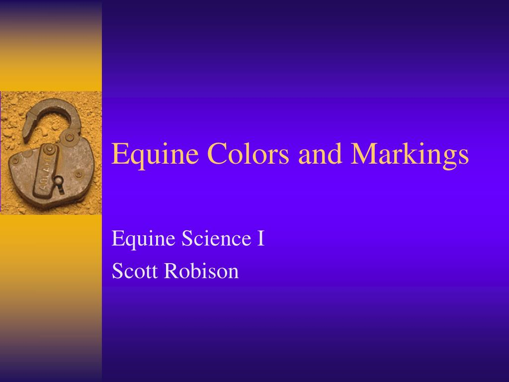 equine colors and markings l.