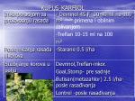 kupus karfiol